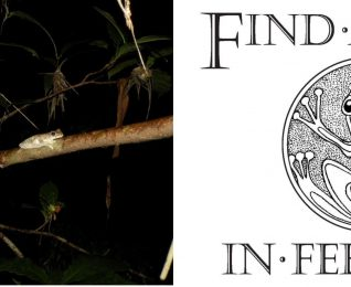 Find a Frog in February – Citizen Science in the Mary River Catchment